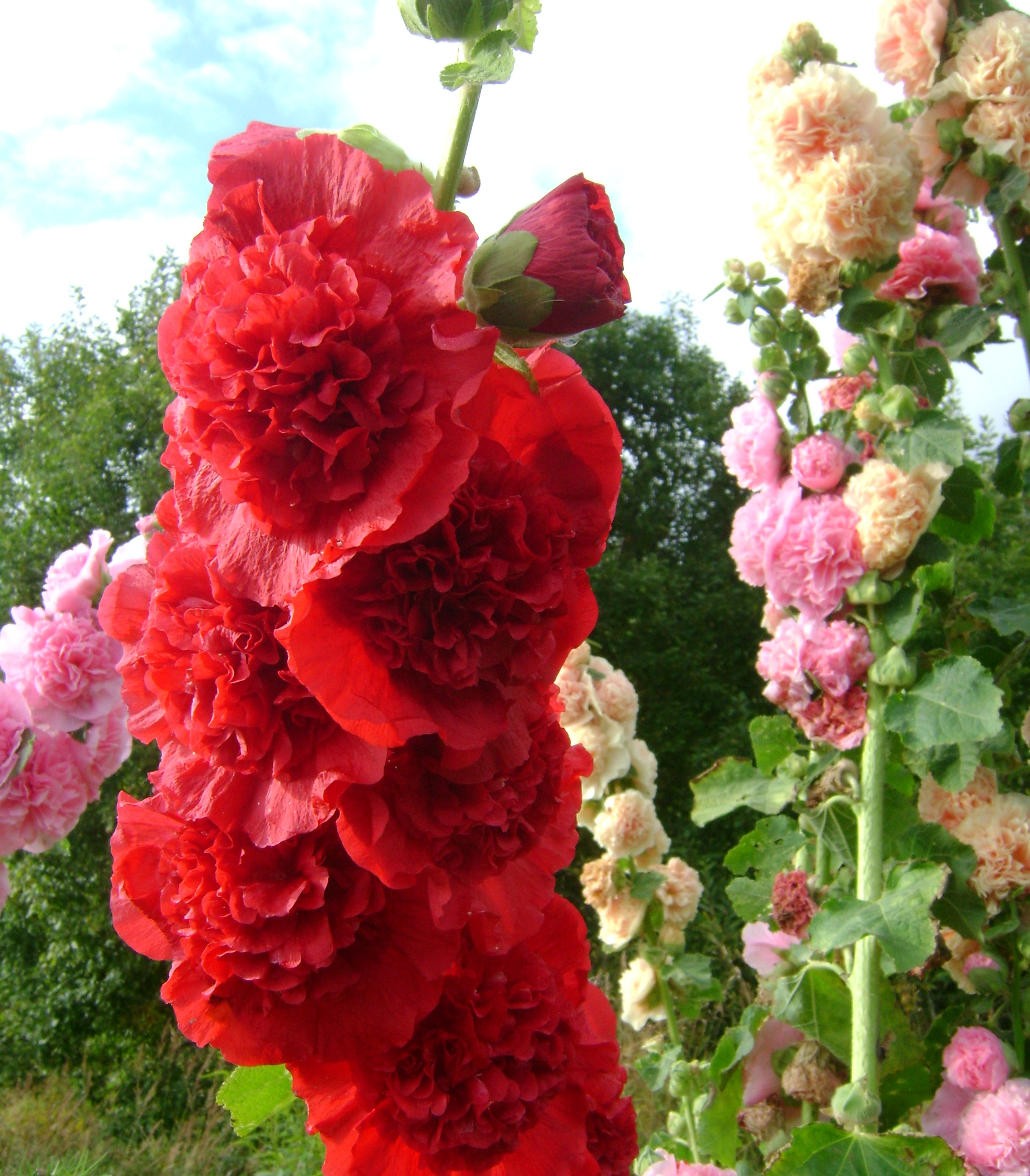 Розы Из Салфеток Пошаговая Инструкция