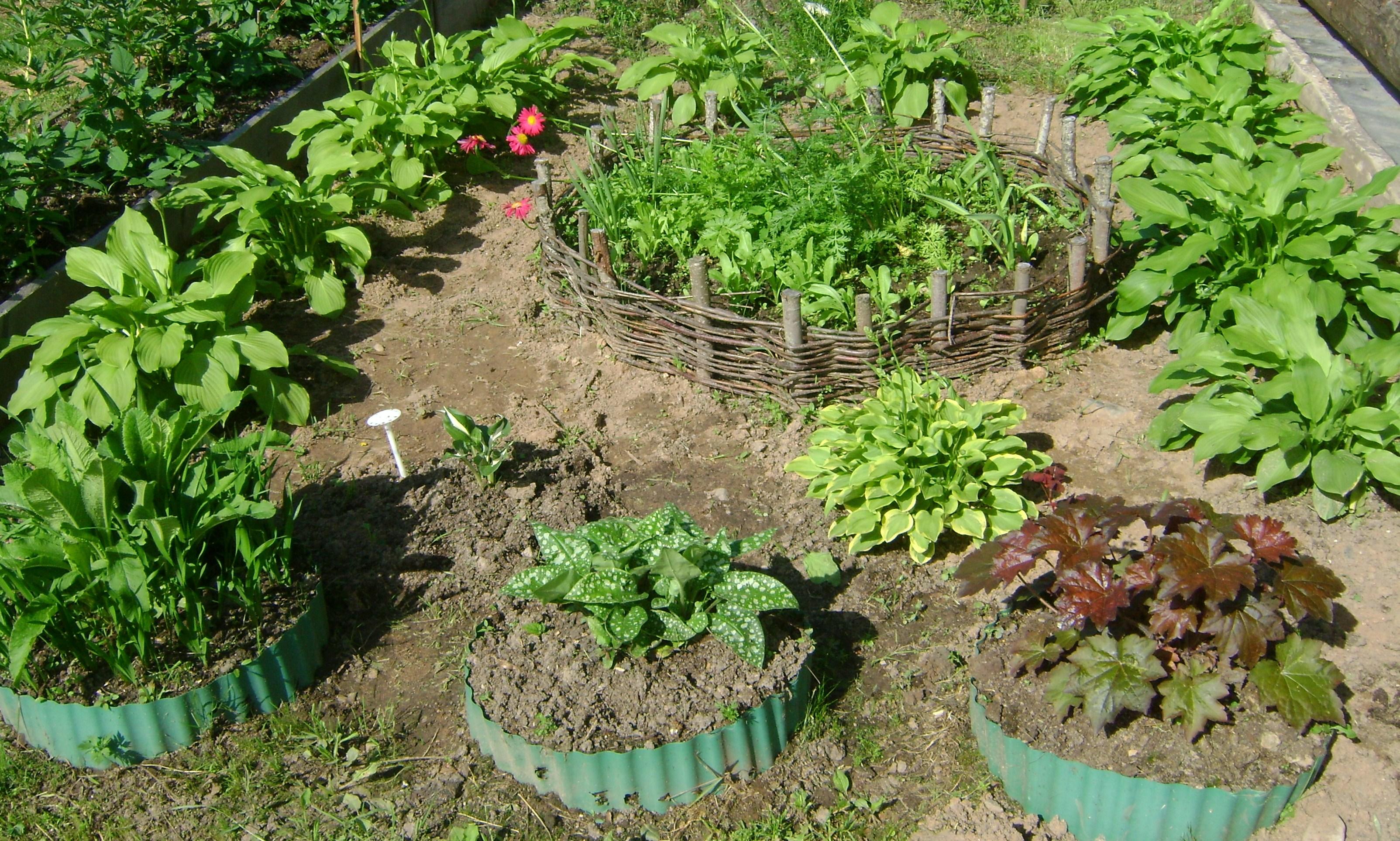 Цветник и огород своими руками фото